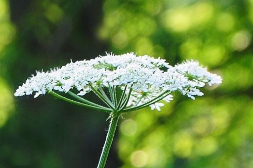 Judi Castille photography - Sunburst-flowerhead500