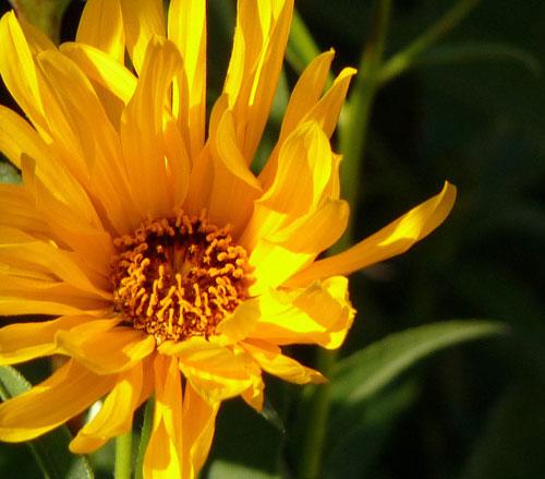 Judi Castille photography - Sunflower500