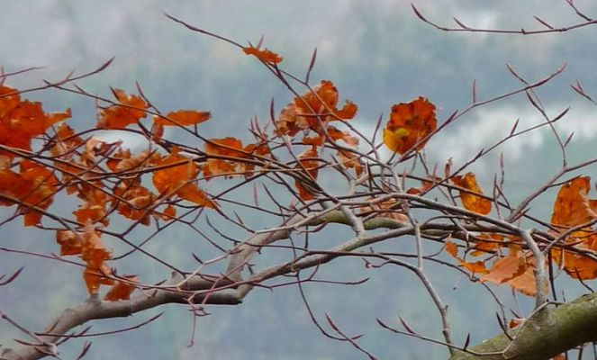 Fall before the freeze Judi Castille