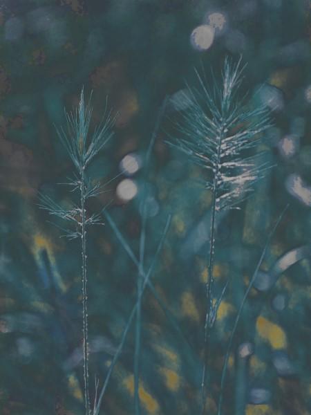 Judi Castille Blue Grass