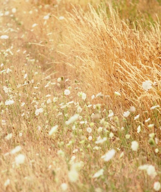Judi Castille Grasses in the breeze