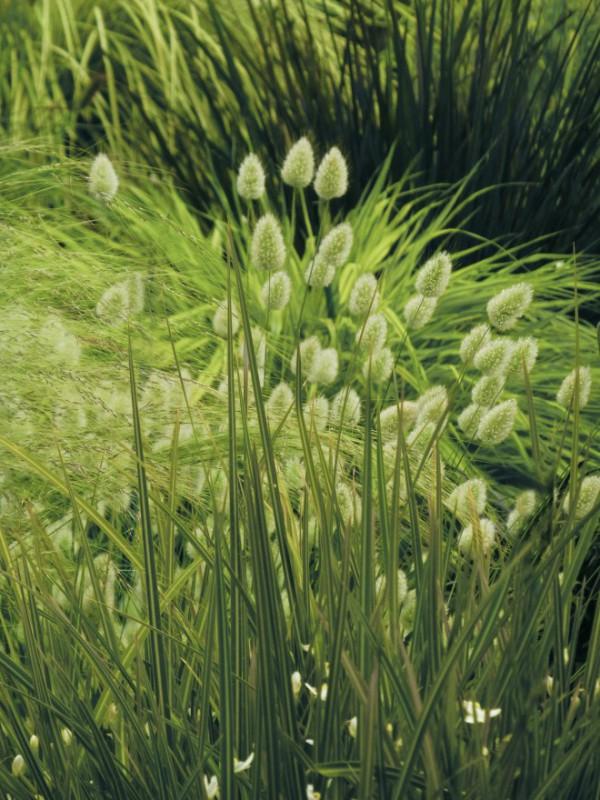 Judi Castille Green Green Grass