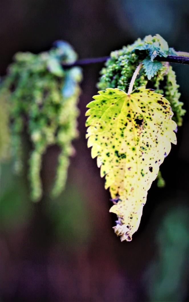 judi-castille-leaf