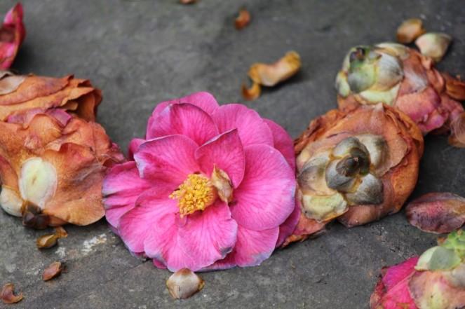 Judi Castille Petal pink