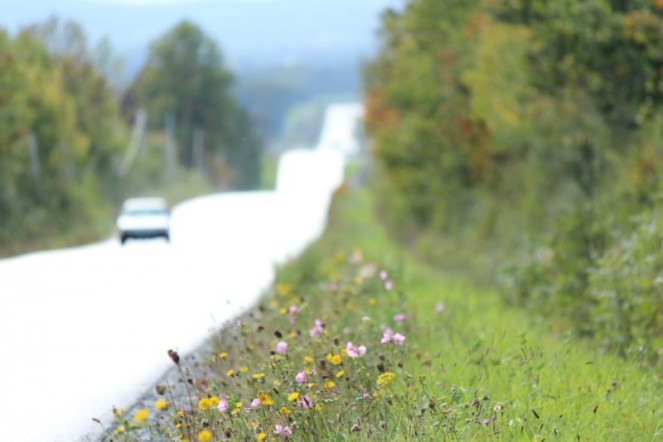 Judi Castille Roadside wildflowers