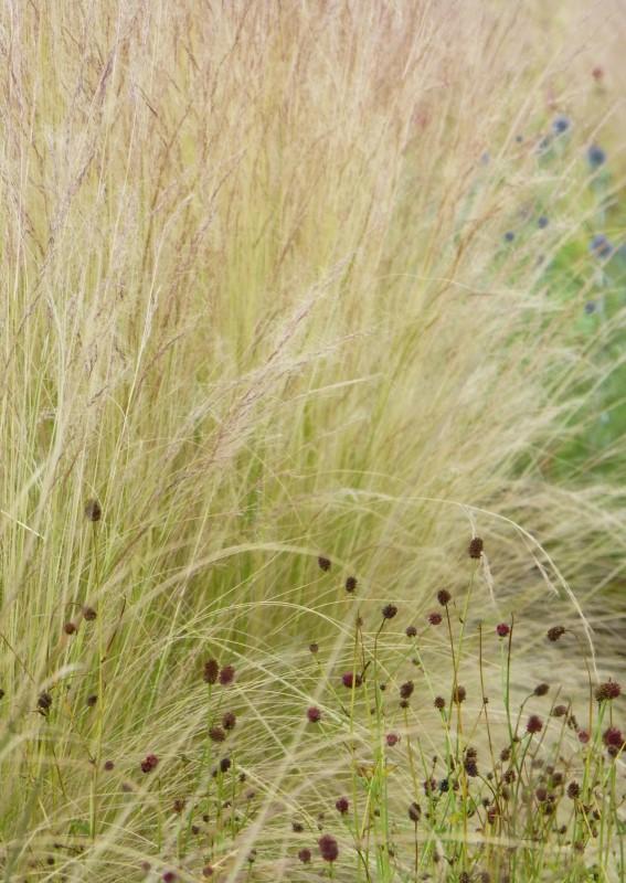 Judi Castille Ruby Grass
