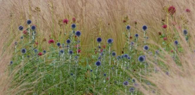 Judi Castille Strewn wildflowers
