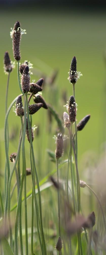 Judi Castille Grasses in Greenwich Park