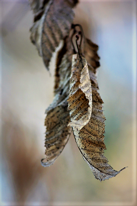 last-leaves-in-winter