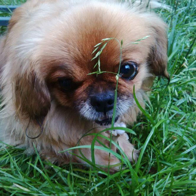 Judi Castille Sousa dog with bone