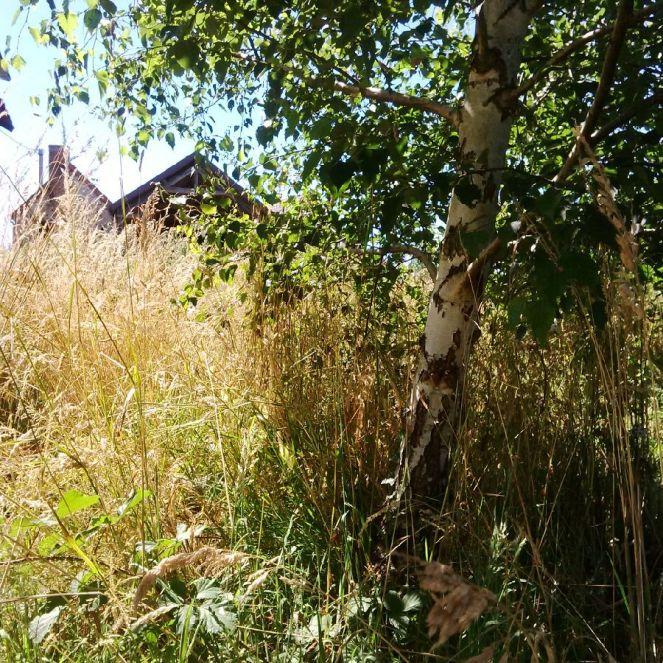 judi-castille-garden-of-eden-2