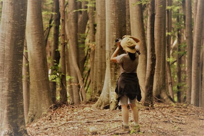 judi-castille-forest-trek