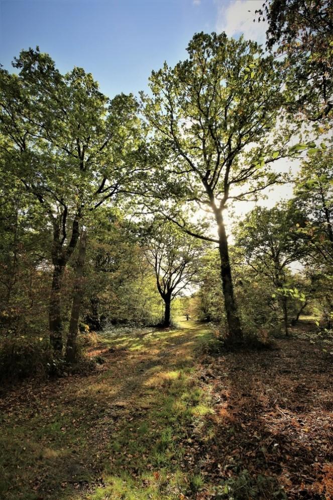 judi-castille-epping-forest-12