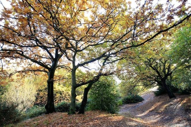judi-castille-epping-forest-3