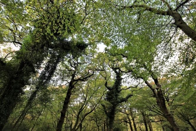 judi-castille-epping-forest-8