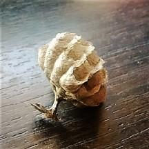 Judi Castille Wasp nest stem