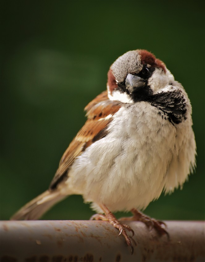 Judi Castille Sparrow on balcony