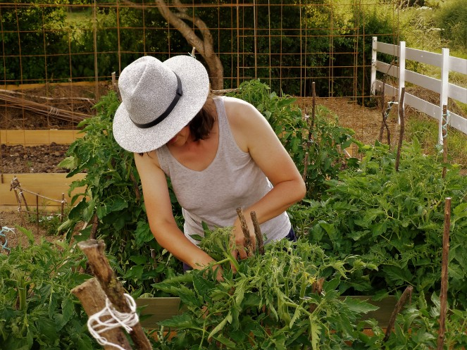 Judi Castille Tending the tomatoes