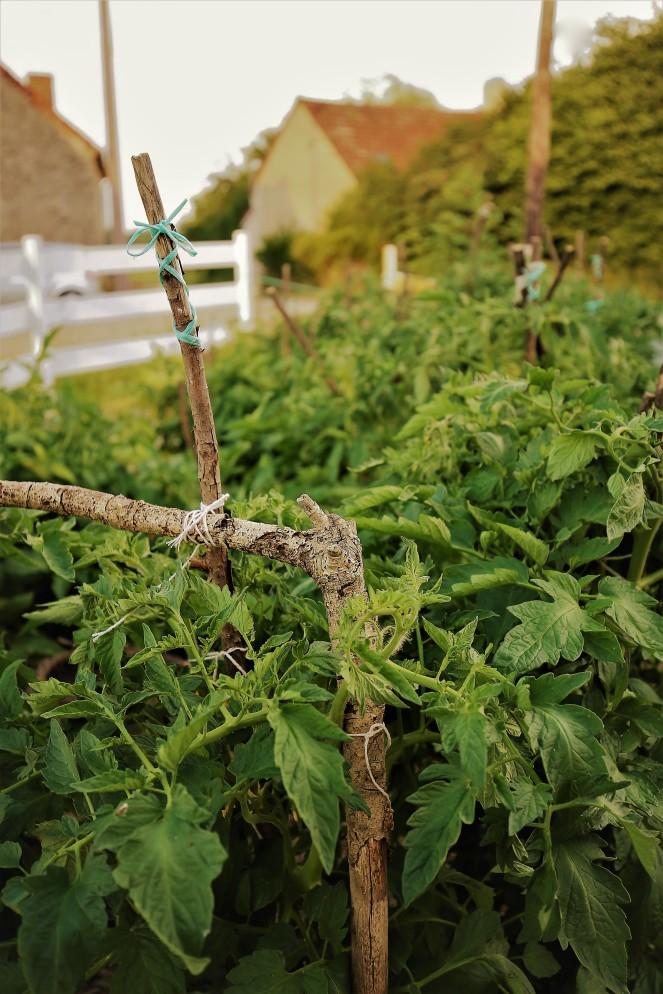 Judi Castille Tomato sticks