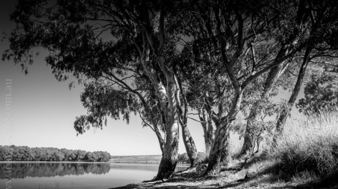 cairn-curran-reservoir-trees-0329.jpg