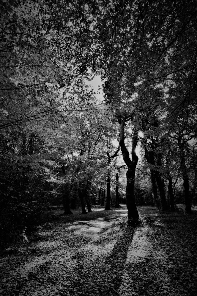 Judi Castille Epping Forest Shaddows