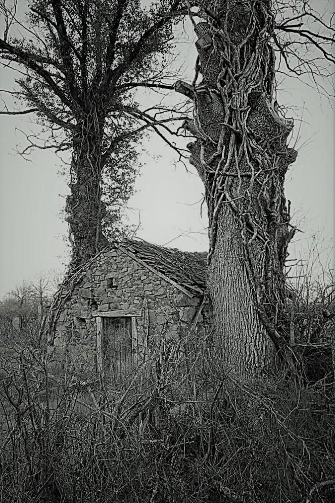 Judi-Castille-The Forrest Cottage