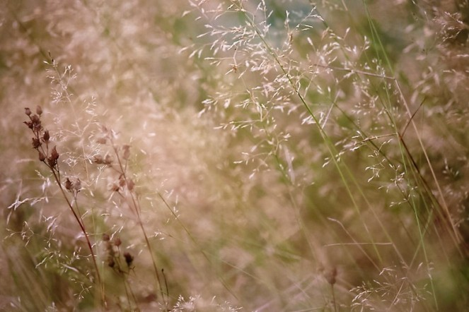 Hiding in the long grasses