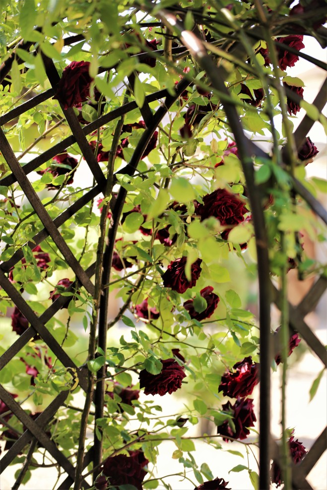 Judi Castille Chateau Du Rivau roses