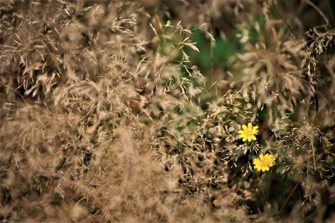 Judi Castille Hidden in the grasses