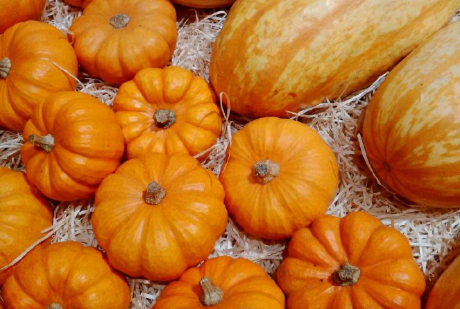 Judi-Castille-Orange-pumpkins