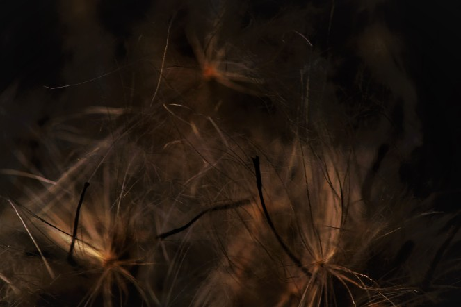 Judi Castille Seed heads in the dark
