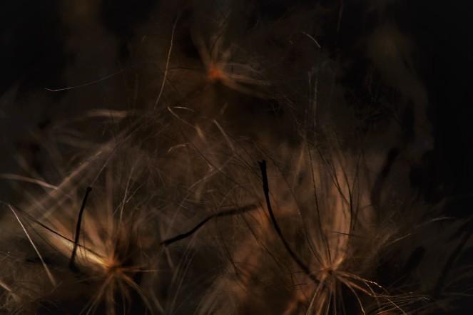 Judi Castille Seed heads in the dark