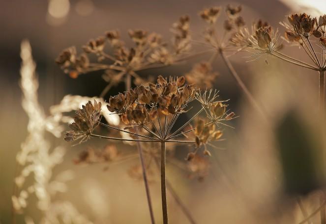Judi Castille Seeds and stems