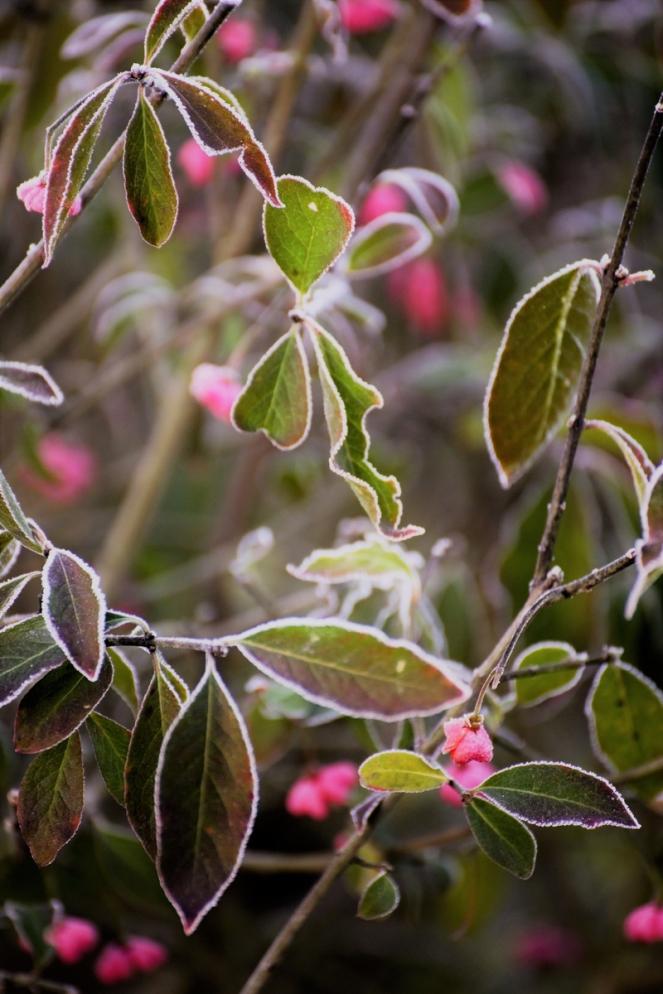 judi-castille-berries