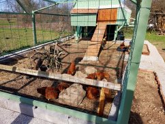 Judi Castille chicken coop and pen perch.jpg