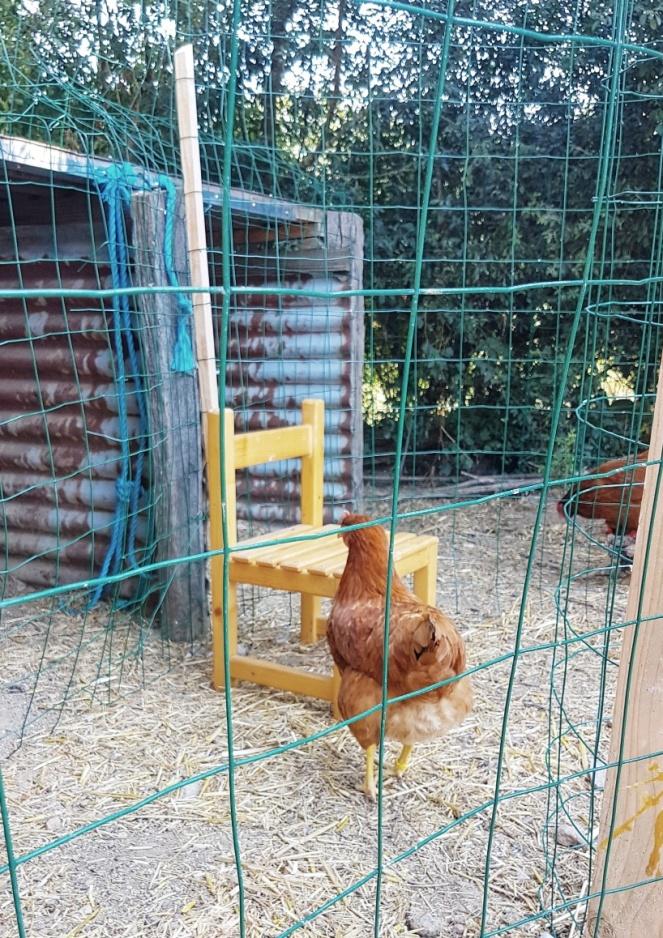 Judi Castille Chicken chair_resized