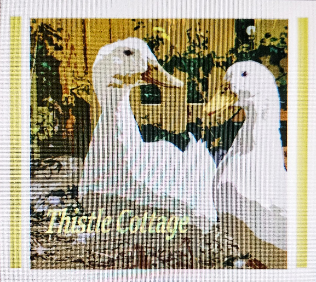Thistle Cottage shop